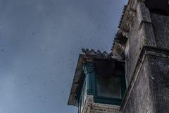 Μέλισσα μελιού και η αποικιακή φωλιά του Στοκ Φωτογραφίες