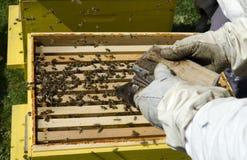 Μέλισσα μελιού στην κηρήθρα Στοκ φωτογραφία με δικαίωμα ελεύθερης χρήσης