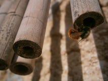 Μέλισσα που αρχίζει την κηρήθρα της Στοκ Εικόνες