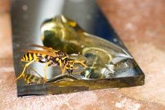 Μέλισσα που τρώει το μέλι Στοκ εικόνα με δικαίωμα ελεύθερης χρήσης