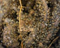 Μέλισσα προσεκτική Στοκ φωτογραφίες με δικαίωμα ελεύθερης χρήσης
