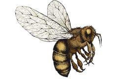 Μέλισσα σε ένα άσπρο υπόβαθρο διανυσματική απεικόνιση
