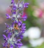 Μέλισσα σε ένα λουλούδι Στοκ εικόνα με δικαίωμα ελεύθερης χρήσης