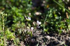 Μέλισσα σε WildFlowers Στοκ φωτογραφίες με δικαίωμα ελεύθερης χρήσης