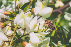 Μέλισσα στην εργασία στοκ φωτογραφίες με δικαίωμα ελεύθερης χρήσης