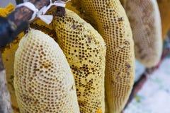 Μέλισσα στην κηρήθρα Στοκ φωτογραφίες με δικαίωμα ελεύθερης χρήσης