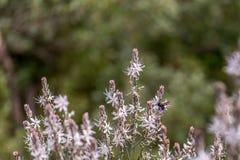 Μέλισσα στην κινηματογράφηση σε πρώτο πλάνο Στοκ εικόνες με δικαίωμα ελεύθερης χρήσης