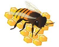 Μέλισσα στη χτένα μελιού διανυσματική απεικόνιση