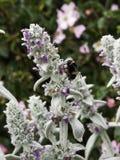 Μέλισσα στις εγκαταστάσεις Στοκ Εικόνα