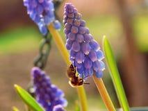 Μέλισσα την άνοιξη Στοκ εικόνες με δικαίωμα ελεύθερης χρήσης