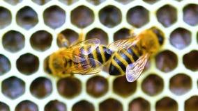 Μέλισσα φιλμ μικρού μήκους