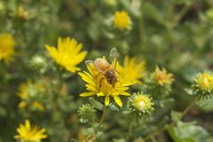 Μέλισσα brunch Στοκ Εικόνες