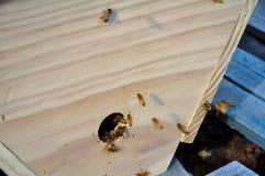 Μέλισσες εργαζομένων Στοκ εικόνες με δικαίωμα ελεύθερης χρήσης