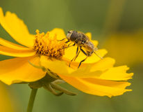 Μέλισσες και λουλούδια Στοκ εικόνα με δικαίωμα ελεύθερης χρήσης