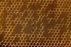 Μέλισσες, οι οποίες προέρχονται από το δριμύ χειμώνα Στοκ Εικόνες