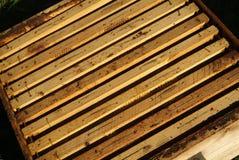 Μέλισσες, οι οποίες προέρχονται από το δριμύ χειμώνα Στοκ φωτογραφία με δικαίωμα ελεύθερης χρήσης