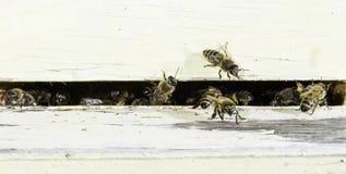 Μέλισσες που εισάγουν την κυψέλη Στοκ Φωτογραφίες