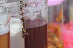 Μέλισσες που περιβάλλουν μια κανάτα του νερού καρύδων Στοκ εικόνες με δικαίωμα ελεύθερης χρήσης