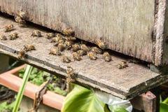 Μέλισσες σε ένα πέταγμα κυψελών Στοκ Εικόνα