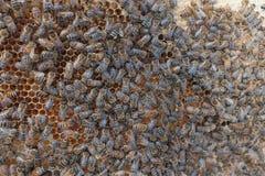 Μέλισσες σε μια κυψέλη στοκ φωτογραφίες