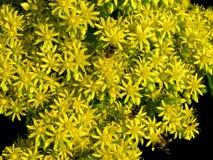Μέλισσες στα λουλούδια στοκ φωτογραφίες