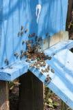 Μέλισσες στην κυψέλη Στοκ Εικόνες