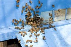 Μέλισσες στην κυψέλη Στοκ φωτογραφίες με δικαίωμα ελεύθερης χρήσης