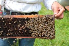 Μέλισσες στο ξύλινο κυψελωτό πλαίσιο Στοκ εικόνες με δικαίωμα ελεύθερης χρήσης