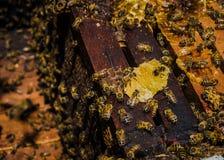 Μέλισσες 1 Στοκ φωτογραφία με δικαίωμα ελεύθερης χρήσης