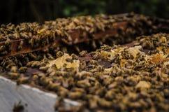 4 μέλισσες Στοκ φωτογραφία με δικαίωμα ελεύθερης χρήσης