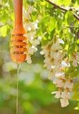Μέλι ακακιών στοκ φωτογραφίες με δικαίωμα ελεύθερης χρήσης