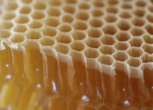 Μέλι, γλυκός, νόστιμο, τρόφιμα, μέλι Στοκ Φωτογραφίες