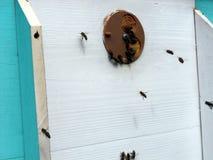 Μέλι κυψελών στοκ εικόνα