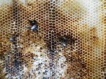 Μέλι κυψελών στοκ εικόνες