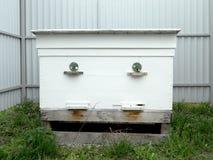 Μέλι κυψελών στοκ φωτογραφίες με δικαίωμα ελεύθερης χρήσης