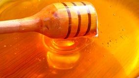 Μέλι που στάζει από Dipper ακονιών απόθεμα βίντεο