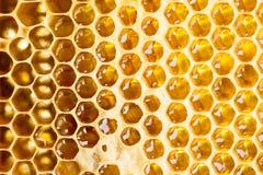 Μέλι στο πλαίσιο Στοκ Εικόνες