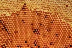 Μέλι στο υπόβαθρο κυττάρων κεριών Στοκ φωτογραφίες με δικαίωμα ελεύθερης χρήσης