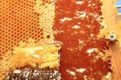 Μέλι στο υπόβαθρο κυττάρων κεριών Στοκ Εικόνες