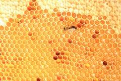 Μέλι στο υπόβαθρο κυττάρων κεριών Στοκ φωτογραφία με δικαίωμα ελεύθερης χρήσης