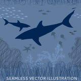 Μέδουσα καρχαριών άνευ ραφής Στοκ Φωτογραφίες