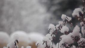 Μήκος σε πόδηα κήπων χειμερινού χιονιού hd απόθεμα βίντεο