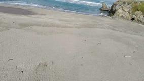 Μήκος σε πόδηα κηφήνων πέρα από την παραλία άμμου με Driftwood φιλμ μικρού μήκους