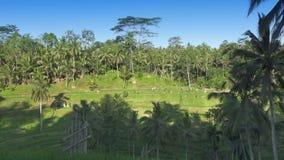 Μήκος σε πόδηα πέρα από το πεζούλι ρυζιού και τους φοίνικες του βουνού και το σπίτι των αγροτών πρεσών Ινδονησία απόθεμα βίντεο