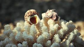 Μήκος σε πόδηα παραλιών θαλασσινών κοχυλιών sunlights hd απόθεμα βίντεο