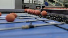 Μήκος σε πόδηα στη γραμμή παραγωγής αυγών με το αυγό που βαθμολογεί την επεξεργασία απόθεμα βίντεο