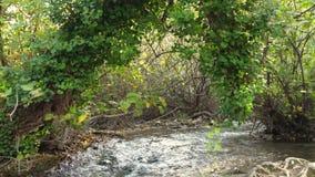 Μήκος σε πόδηα του μικρού ποταμού στα ξύλα φιλμ μικρού μήκους
