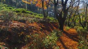Μήκος σε πόδηα Timelapse του φυσικού τοπίου κοιλάδων LU Jingxiu βουνών της Κίνας στα τέλη του φθινοπώρου φιλμ μικρού μήκους