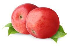 μήλα δύο Στοκ εικόνες με δικαίωμα ελεύθερης χρήσης