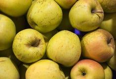 μήλα κίτρινα Στοκ Φωτογραφία